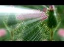 Madhumita - Wave Spiral Kiirtan (BABA NAM KEVALAM)