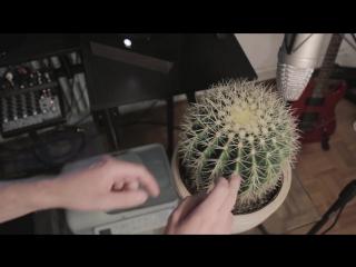 DrumBass на кактусе