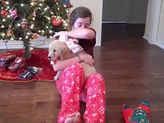 McKenna's Christmas Puppy Surprise