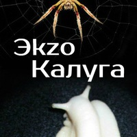 Логотип Эkzo_Калуга (змеи пауки улитки кивсяки)