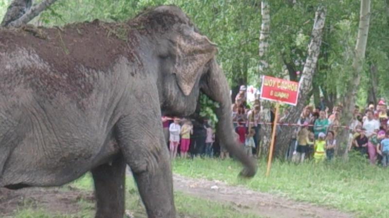 Пятитонные слонихи Дженни и Магда в Саду Победы 1