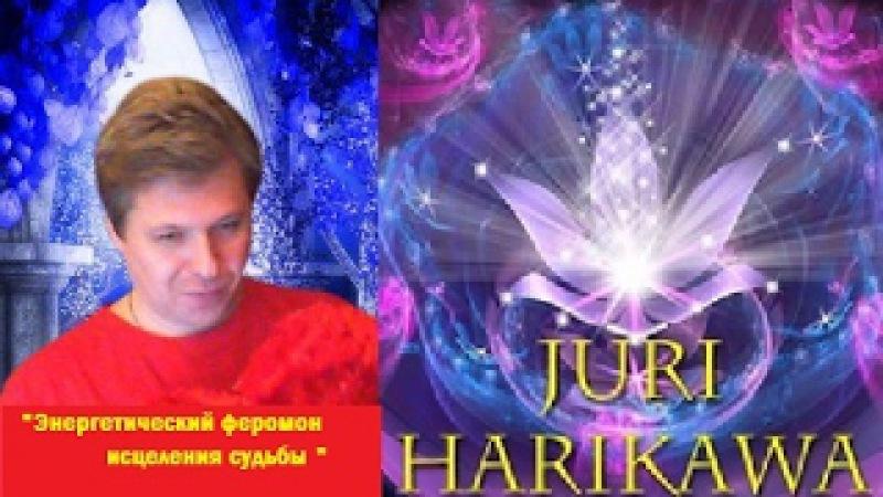 Энергетический феромон исцеления судьбы в световых частотах с Юрием Харикава