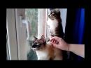 Смешные кошки приколы про кошек и котов 2017 85 Кошки до слез юмор прошлых лет