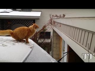 Кот и снег. смешные коты. приколы. кот в снегу. cat and snow. kitten. kater. kät