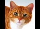Прикольные и интересные кошки и котята