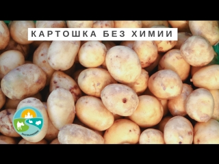 Фермерские продукты Москва. Натуральная картошка без химии.