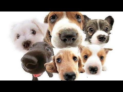 MÚSICA SUAVE Y CALMANTE Para Gatos y Perros Inquietos ♥♥♥ Música Relajante Para Dormir Mascotas 🎧 1H