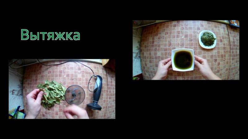 Масло лаврового листа. Изготовление вытяжки из лавра благородного в домашних условиях.Масло лаврушки