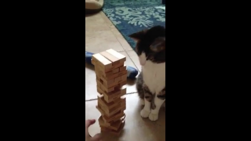Jenga with a cat
