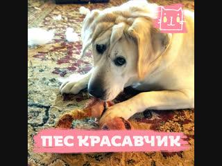 Девушка из приемной семьи приютила брошенного пса с необычной внешностью