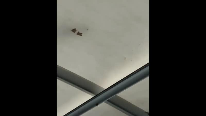 Сделали полупрозрачную крышу на террасе.mp4