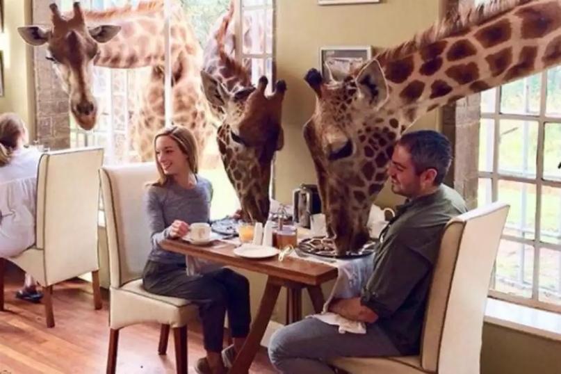 Giraffe Manor, Koitobos, Найроби, 00503, Кения