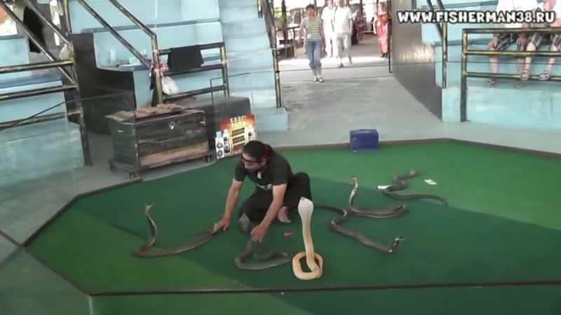 Шоу змей в Тайланде Паттая С участием Мангуста