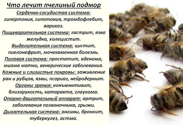Пчелиный подмор как принимать при простатите у мужчин хранический простатит что это