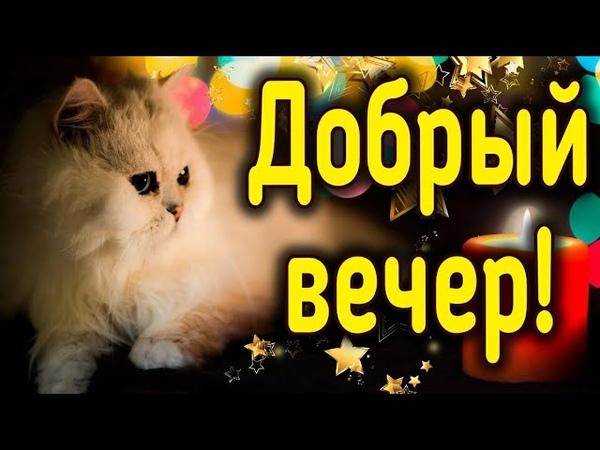 Добрый вечер Теплого и Уютного вечера Добрые пожелания для хорошего настроения