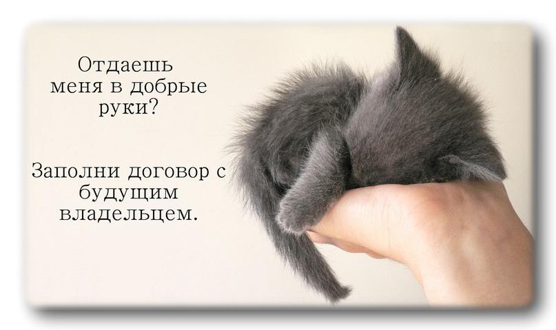Как отдать животное в добрые руки?, изображение №2