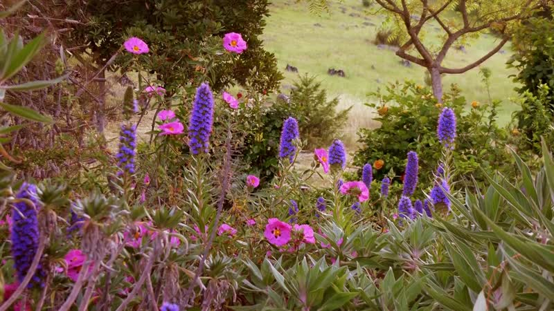 BEAUTIFUL FLOWERS - ERNESTO CORTAZAR - HISTORIA DE UN AMOR - MI AMOR POR TI