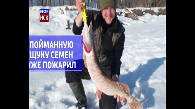 Рыбак из Маслянино поймал щуку весом 6 килограммов