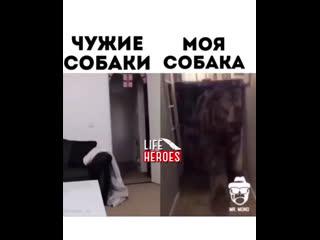 моя собака vs другие собаки