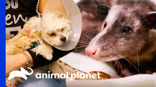 Check Out These Amazing Medical Moments! | The Vet Life