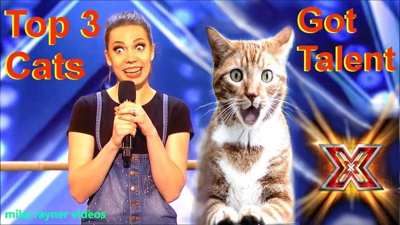 Savitsky Cats Got Talent Auditions! Amazing Cat Talent! Best Top 3 Funny Cute Animals! AGT 2018