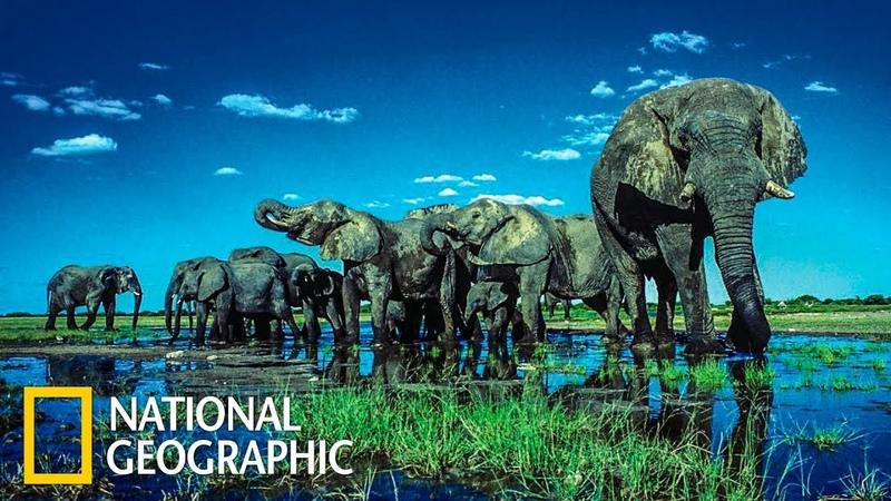 Этоша дикая пустыня Африки National Geographic