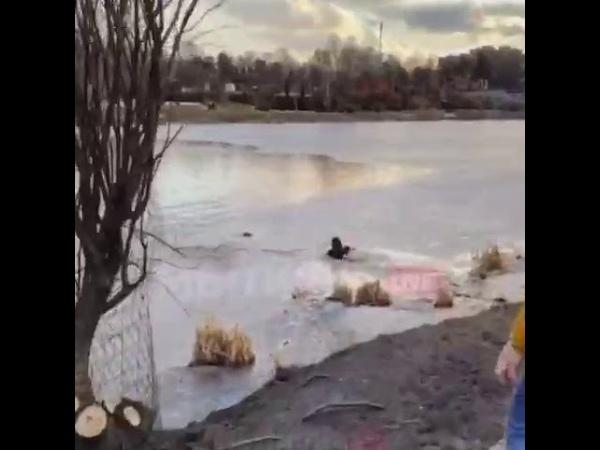 В Мытищах мать троих детей, педиатр и детский гастроэнтеролог Алина вытащила из-под льда собаку.