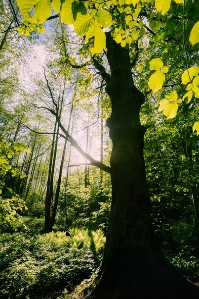 Печерский лесопарк. Могилёв, Беларусь
