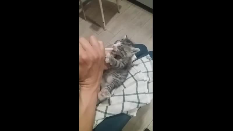 Маленький котеночек с рынка на пути к выздоровлению часть 2