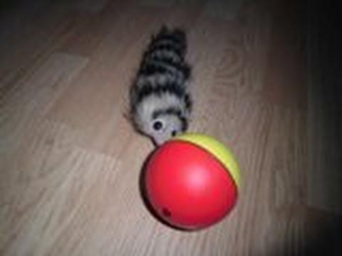Игрушка мангуст играет с шариком toy mongoose plays with a ball