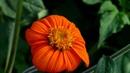 BEAUTIFUL FLOWERS FOR YOU - ERNESTO CORTAZAR - ANNA