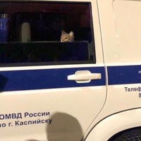 Муртуз Магомедов