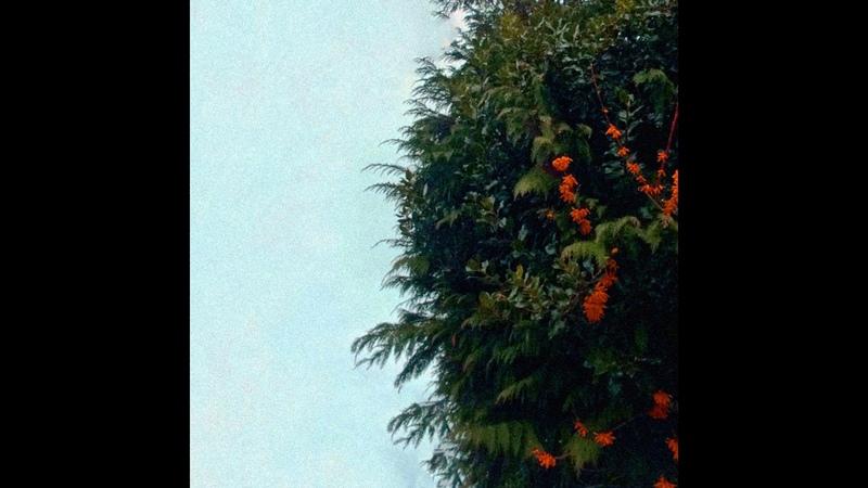In Autumnus - Intrusiveless (Full Album)