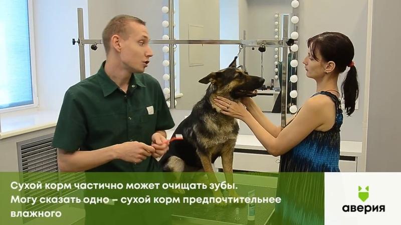 Как самим почистить зубы собаке