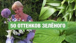 Зелёные хосты, преимущества сортов, разнообразие оттенков, экспозиция в БИН РАН