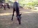 Лошадь съела птичку