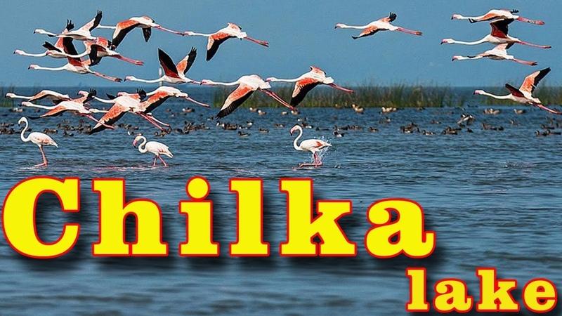 Chilka lake in Odisha