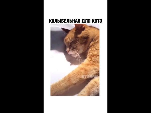 Колыбельная для кота