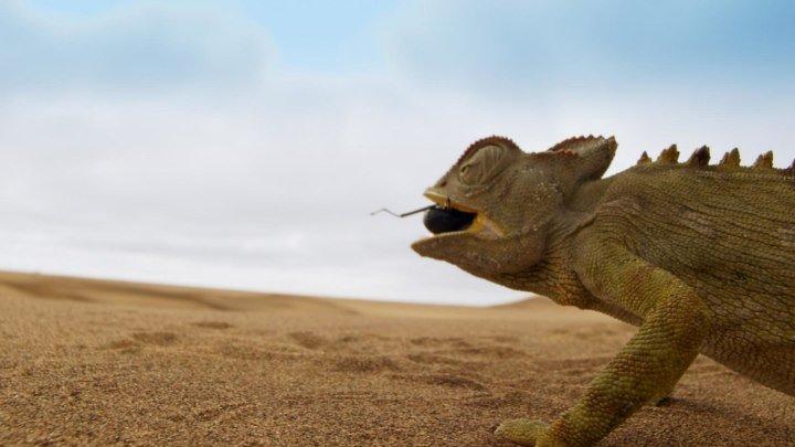 BBC Планета Земля II Пустыни Deserts