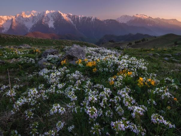 Цветы Ингушетии Фото: Андрей Грачев