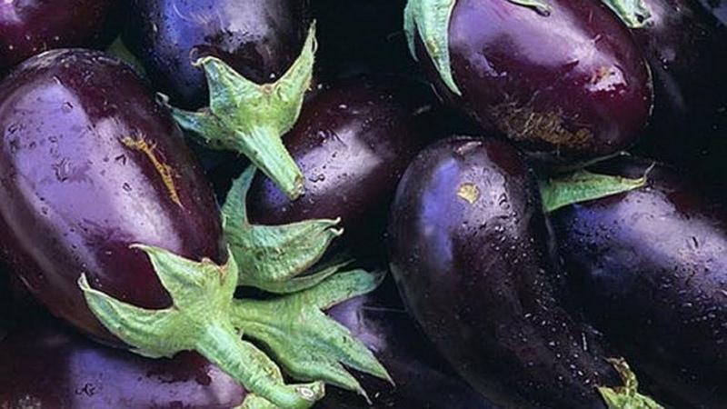 Выращивание Баклажанов в открытом грунте как бизнес идея