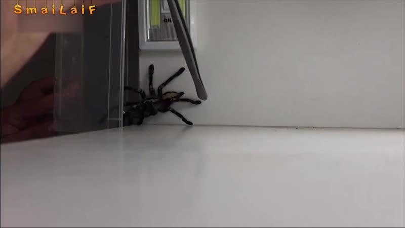 Немного не так все пошло, как задумано было. Ловля паука.