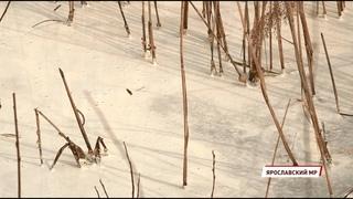 В водоеме под Ярославлем обнаружили сброшенные отходы непонятного происхождения