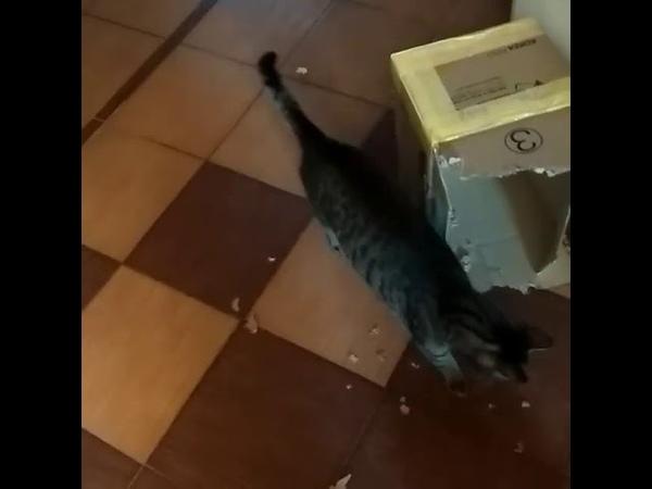 3345). 28.03.2018 - Красавица Барса (Теперь Бася) уехала домой! (видео из дома)