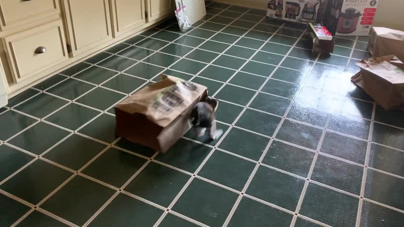 Our kitten discovered brown bags yesterday