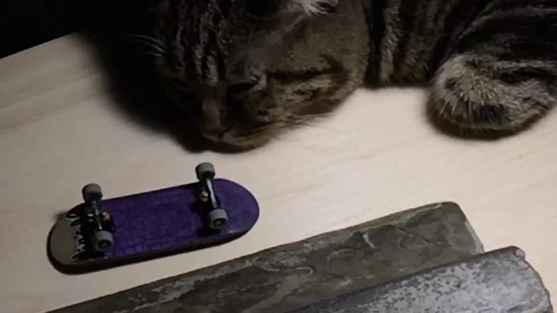 Systeam Fingerboards Neronov Vlad 'Quarter Cat'