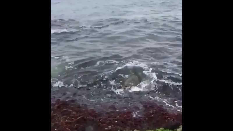 Спасение черепахи