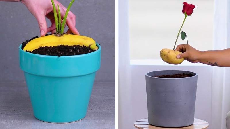12 Indoor Gardening Hacks That Make You Throw Your Hands up and Sprout