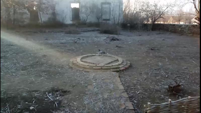 Такла голуби 05 12 19 Одесская область