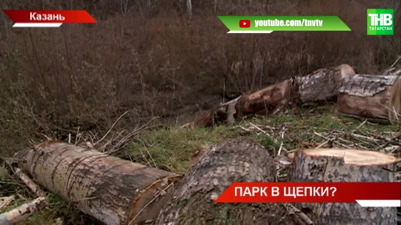 Казанцы обеспокоены состоянием парка аттракционов «Кырлай: кто-то вырубает многолетние деревья